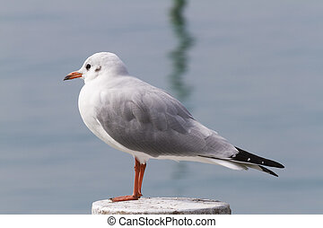 seagull on lake
