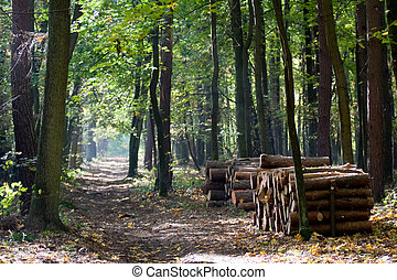 Wood storage in woodland - Path in woodland between high...