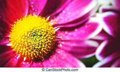 Abstract floral backgrounds with gerbera flowers