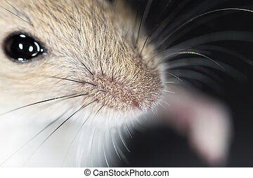 mouse nose close-up