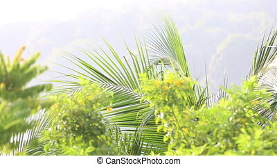 green branches in tropics - green branches with leaves after...