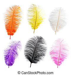 Collection of big color feathers Isolated on white...