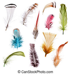 Collection of different color feathers. Isolated on white...