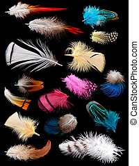 Collection of different color feathers Isolated on black...