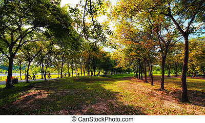Green city park in sunny summer day - Green city park in...