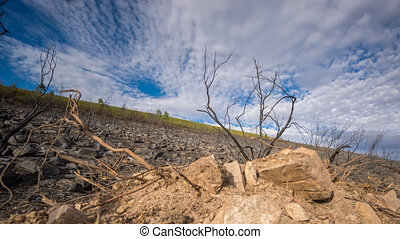 Time lapse of Hill after wildfire in 4k, sliding camera -...