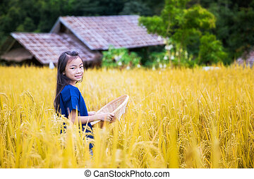 Thai child in golden rice farm