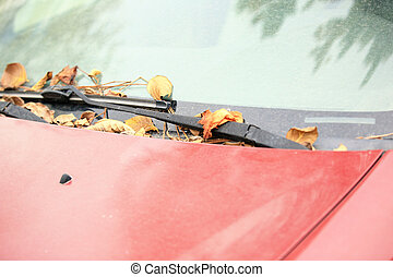 autumn fall leaves on dumped car windshield