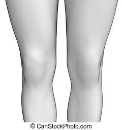 Knee anatomy artwork - Illustration of knee anatomy artwork