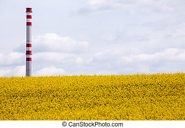 Rapeseed field and chimmey Slovakia