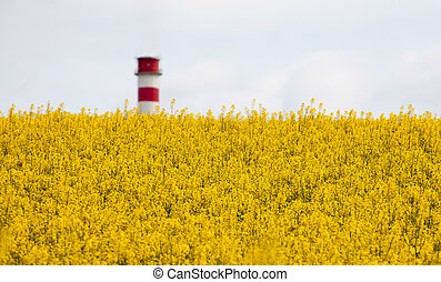 Rapeseed field and chimmey, Slovakia