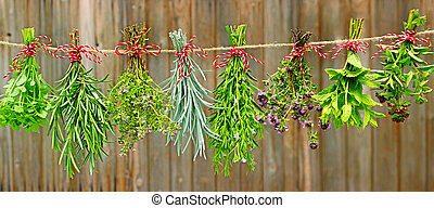 herbs on line - Various fresh herbs hanging in bundle to dry...