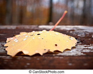 Lone Fallen Autumn Leaf with Forest in Background - A Yellow...