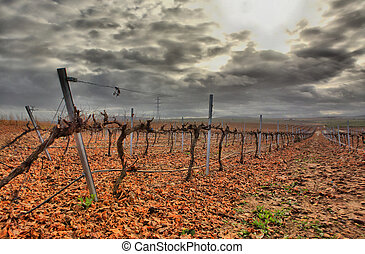 Vineyard in Guadiana river lands - Cropland of Vineyards in...