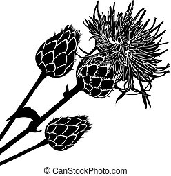 Thistle Clip Art and Stock Illustrations. 423 Thistle EPS ...