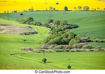 Field of rapeseeds at region Liptov, Slovakia