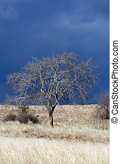 Bare tree on a winter landscape
