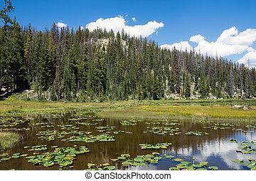 Alpine lake with Potbelly and mountain covered with fir...