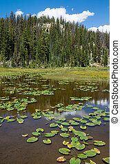 Raised lake with Potbelly and mountain covered with fir...