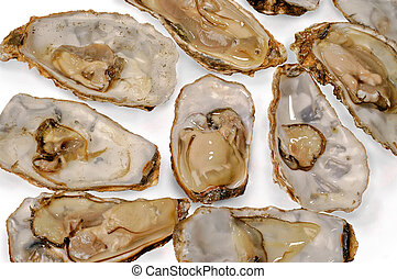 oysters raw recognized white background closeup top...