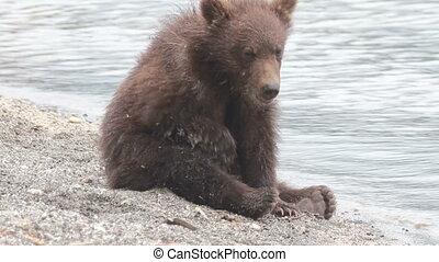 Wild brown bear in the forest summer