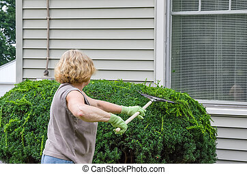 Woman Working Outdoors - Woman Raking Clippings off Freshly...
