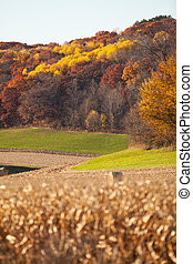 Fall Landscape - Fall landscape with cornfields and colored...