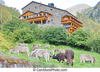 Typical dark brick Andorra house with grazing cows