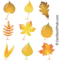 Autumn leaves - Vector autumn leaves of birch, poplar, ash,...