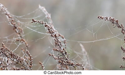 branches with spider cobweb on wind