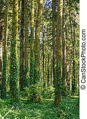 Dense green forest - A background from a dense green forest