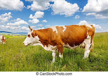 Brown cow on field