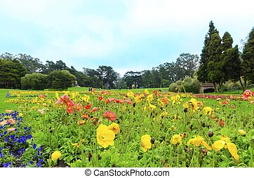 Conservatory of flowers, San Francisco - The garden of the...