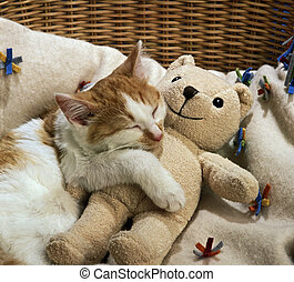 sleeping cat with a toy - cat sleeping with teddy bear