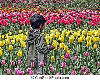 tulipánok, lábujjhegyen megy