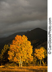 Aspen tree and clouds - an aspen tree is illuminated by the...