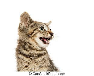 Cute tabby kiten - Cute short hair baby tabby kitten on...