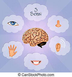 Five Senses - illustration of five Senses