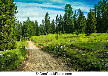 Landscape Italy, Dolomites - the pine forest tour