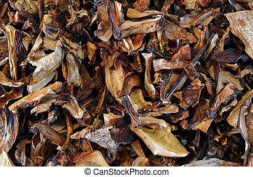 Dried edible mushrooms - Heap of dried edible mushrooms