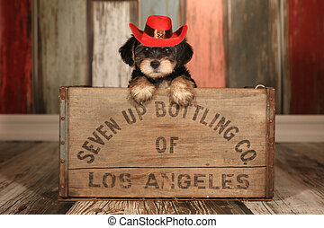 Cute Teacup Yorkie Puppy in Adorable Backdrops and Prop for...