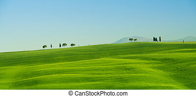 Tuscany landscape, green grass, hills in summer.