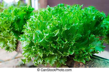 蔬菜, 農場, 綠色