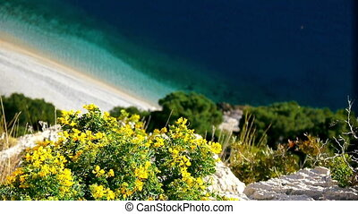 Yellow flowers above sea