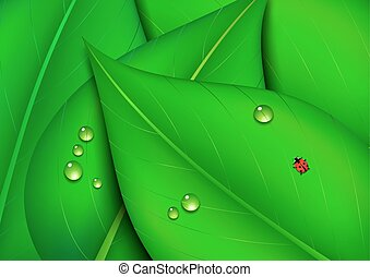 Nature Green Leaf Background
