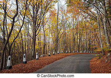 Road in a red autumn forest - Autumn landscape. Road in the...