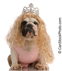 english bulldog dressed up as princess with ugly wig and...
