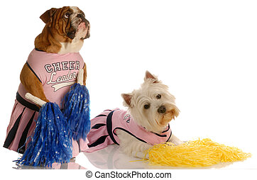 two dogs dressed up as cheerleaders - english bulldog and...