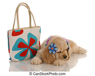 cocker spaniel puppy laying down beside fashionable purse -...