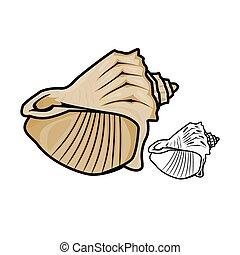 Sea Shell - Vector illustration : Sea Shell on a white...